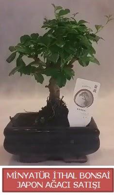 Küçük görsel bonsai japon ağacı bitkisi  Konya yurtiçi ve yurtdışı çiçek siparişi