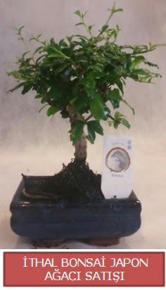 İthal küçük boy minyatür bonsai ağaç bitkisi  Konya kaliteli taze ve ucuz çiçekler