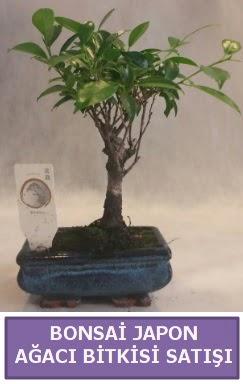 İthal Bonsai japon ağacı bitkisi satışı  Konya hediye sevgilime hediye çiçek