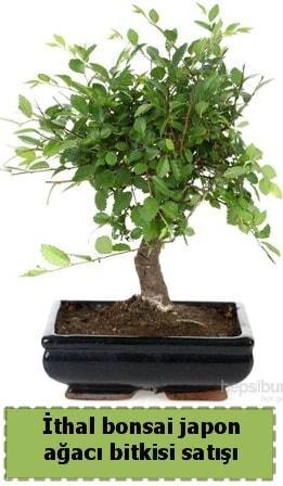 İthal bonsai saksı çiçeği Japon ağacı satışı  Konya hediye sevgilime hediye çiçek