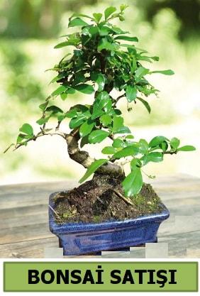 Çam bonsai japon ağacı satışı  Konya güvenli kaliteli hızlı çiçek