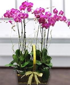 7 dallı mor lila orkide  Konya çiçek online çiçek siparişi