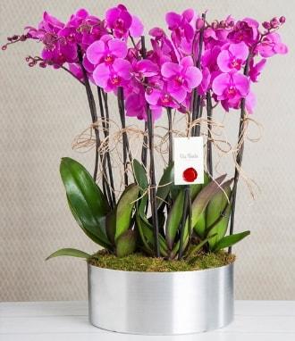 11 dallı mor orkide metal vazoda  Konya çiçek online çiçek siparişi