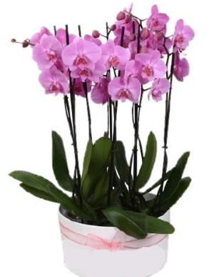 Beyaz seramik içerisinde 7 dallı mor orkide  Konya kaliteli taze ve ucuz çiçekler