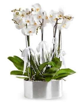 Beş dallı metal saksıda beyaz orkide  Konya çiçek servisi , çiçekçi adresleri