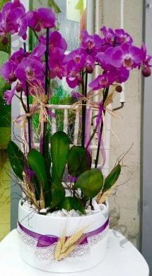 Seramik vazoda 4 dallı mor lila orkide  Konya çiçek , çiçekçi , çiçekçilik
