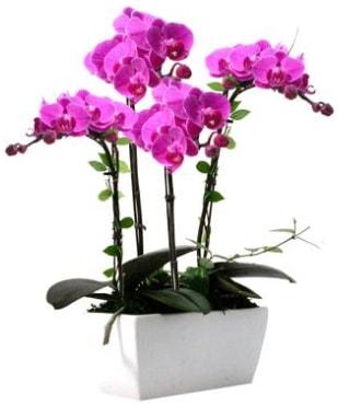 Seramik vazo içerisinde 4 dallı mor orkide  Konya güvenli kaliteli hızlı çiçek