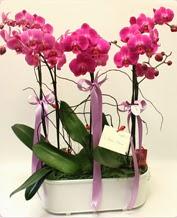 Beyaz seramik içerisinde 4 dallı orkide  Konya online çiçekçi , çiçek siparişi