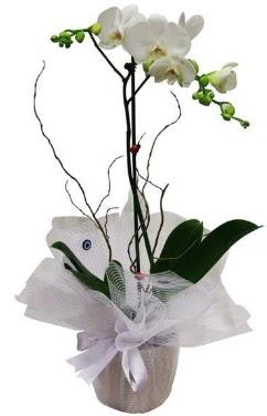 Tek dallı beyaz orkide  Konya ucuz çiçek gönder