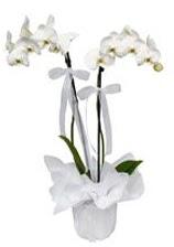 2 dallı beyaz orkide  Konya cicekciler , cicek siparisi