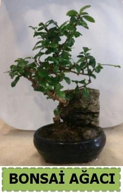 Bonsai ağacı japon ağacı satışı  Konya çiçek yolla , çiçek gönder , çiçekçi