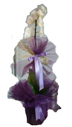 Tek dallı beyaz orkide süper kalite ithal  Konya çiçek gönderme sitemiz güvenlidir