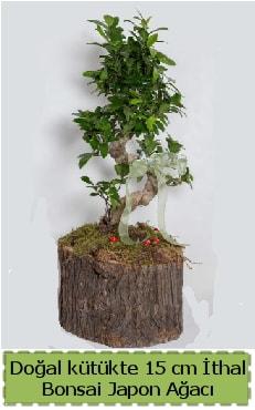 Doğal kütükte İthal bonsai japon ağacı  Konya çiçek mağazası , çiçekçi adresleri