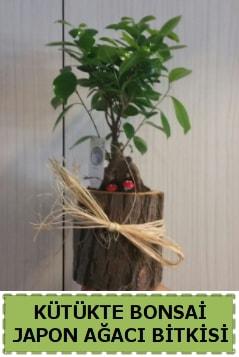 Kütük içerisinde doğal bonsai ağacı  Konya kaliteli taze ve ucuz çiçekler