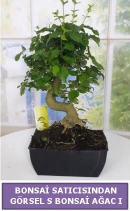 S dal eğriliği bonsai japon ağacı  Konya güvenli kaliteli hızlı çiçek