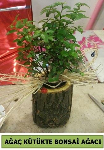 Doğal ağaç kütük içerisinde bonsai ağacı  Konya çiçek online çiçek siparişi
