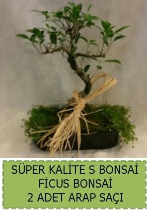 Ficus S Bonsai ve arap saçı  Konya kaliteli taze ve ucuz çiçekler