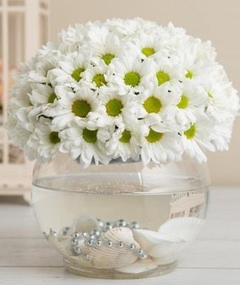 Fanusta beyaz Papatya  Konya güvenli kaliteli hızlı çiçek