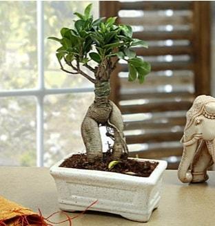 Marvellous Bonsai ginseng  Konya çiçek gönderme sitemiz güvenlidir